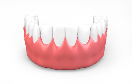 chew: 3D illustration of lower gum and teeth, dental concept.
