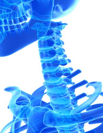 cervical: 3D illustration of Cervical Spine - Part of Human Skeleton.