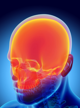 3D illustration of Cranium - Part of Human Skeleton.