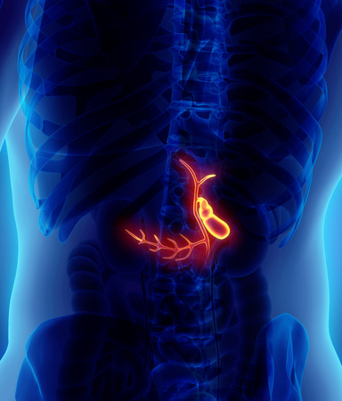 bile: 3D illustration of male Gallbladder, x-ray medical concept. Stock Photo