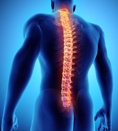 3D illustration of Spine - Part of Human Skeleton.