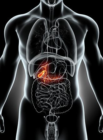 metabolism: 3D illustration of male Gallbladder, x-ray medical concept. Stock Photo
