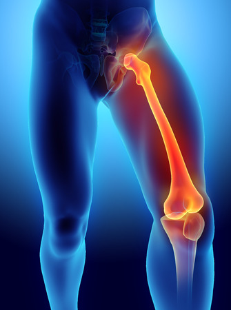patella: 3D illustration of Femur - Part of Human Skeleton. Stock Photo
