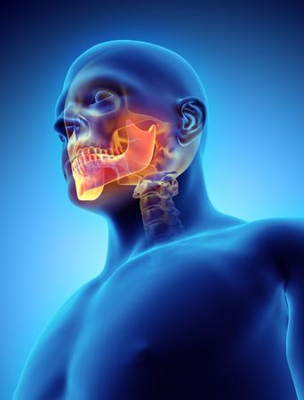 3D illustration of Mandible - Part of Human Skeleton. Stock Photo