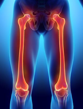 3D illustration of Femur - Part of Human Skeleton. Stock Photo