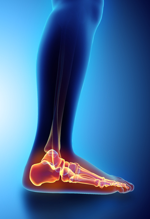 3D illustratie van de Voet van het skelet - Een deel van menselijk skelet. Stockfoto
