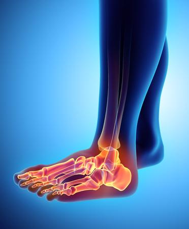 Ilustração 3D do esqueleto do pé - parte do esqueleto humano.
