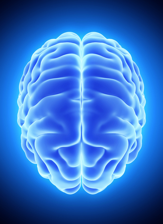 blue brain: 3D illustration of bright blue brain, anatomy and medical concept.