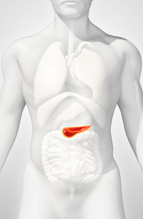 pancreatic cancer: 3D illustration of Pancreas - part of digestive system, medical concept.