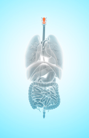 3D illustration of Epiglottis - Part of Human Organic.