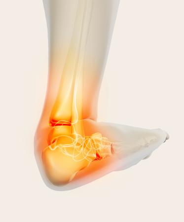 Tobillo doloroso - esqueleto de rayos x, concepto médico Ilustración 3D.
