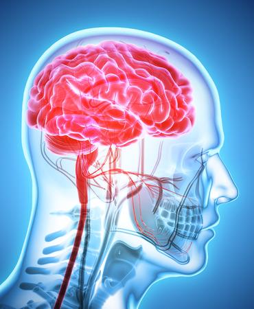 neurons: Human Internal Organic - Human Brain, 3D illustration medical concept.