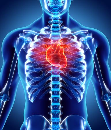 3D illustratie van Heart - Een deel van de mens Organic.