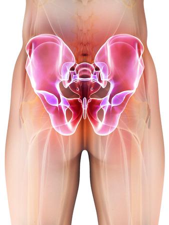 hip fracture: 3D illustration of Hip Skeleton, medical concept.
