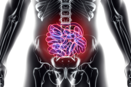 3D illustration of Small Intestine, Part of Digestive System.