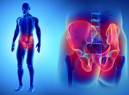 3D illustration of Hip Skeleton, medical concept.