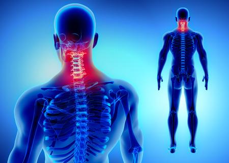 Ilustración 3D de la columna cervical - Parte del esqueleto humano. Foto de archivo