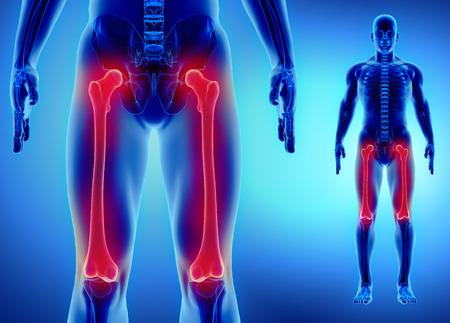 大腿骨 - 人間の骨格の一部の 3 D イラストレーション。
