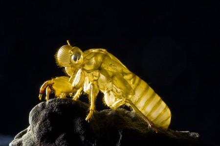 Close up for skin of cicada image photo