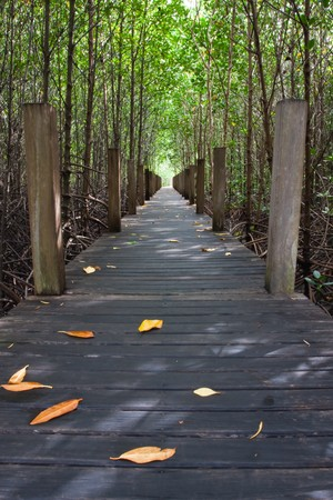 Wood bridge in Thailand mangrove national park image Stock Photo - 7105155