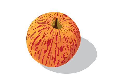 gala: A Royal gala apple has beautiful different colour of skin.