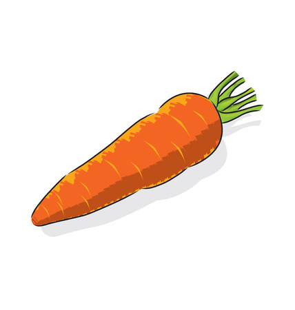 widely: Carrots is a root vegetable, usually orange in colour, widely used in many cuisines. Illustration
