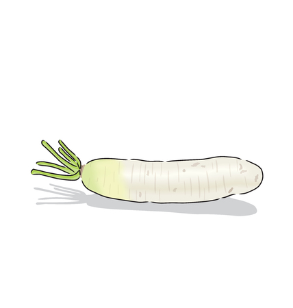 vegatables: a white radish, A vegetable is found in eastern food.