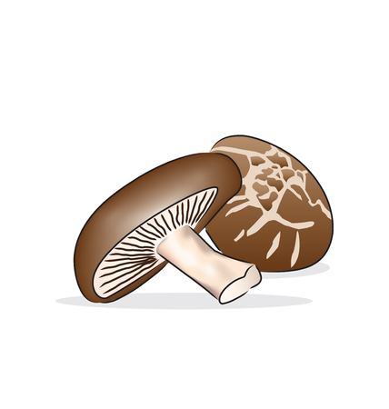edible mushroom: The shiitake is an edible mushroom native to East Asia. It is considered a medicinal mushroom.