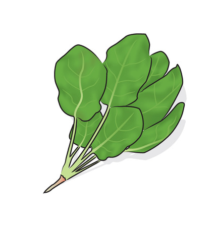 chinese spinach: a whole tree of fresh spinach.