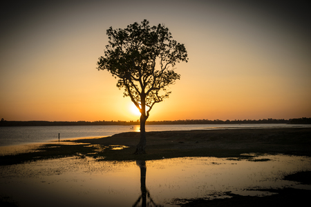 the tree hide sunshine inside the river, evening, sunset background Stock Photo