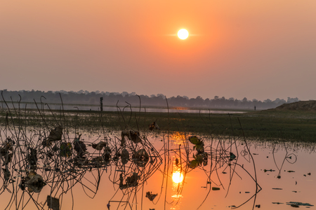 sere: Lotus leaf in the river is shrinkking and die, with sunset background, beautiful landscape Stock Photo