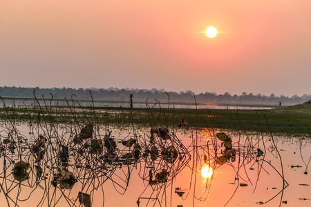 Lotus leaf in the river is shrinkking and die, with sunset background, beautiful landscape Stock Photo