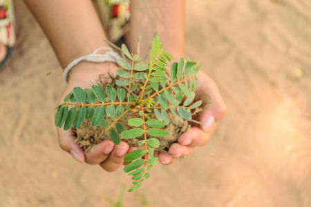 two hand holding little tree,concept develop green earth