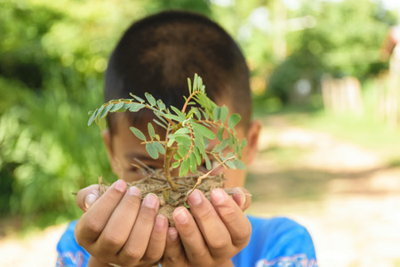 two hand of children holding little tree,concept develop green earth