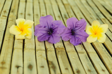 ruellia tuberosa flower is purple color flower and pumeria flower put on wooden bamboo table background Stock Photo