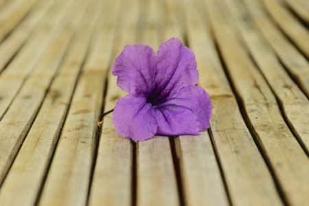 ruellia tuberosa flower is purple color flower put on wooden bamboo table background