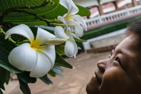 Enfant ou garçon sent la fleur de plumeria dans le jardin, le soir il se sent be smile and Happiness Banque d'images - 81702042