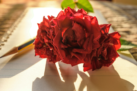 Writing note love, red rose and note and pencil on old wooden and sun lighting passed window in the morning, lovely and feeling warm heart, Valentines day aconcept.
