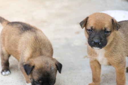 Activity of the little puppy, animal wildlife , dog puppy feeling and lovely animal concept.