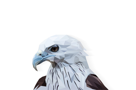 Head of eagle polygon isolated, low poly modelling geometric and triangle design, animal wildlife vector concept, vector art and illustration.