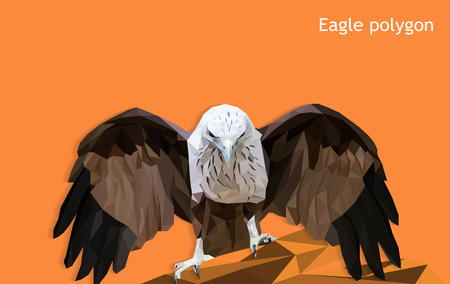 eagle polygon isolated, low poly modelling geometric and triangle design, animal wildlife vector concept, vector art and illustration.