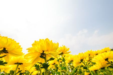 flower blooming,nature background wallpaper,sky and sunlight cloud backdrop,nature flower beautiful color concept.