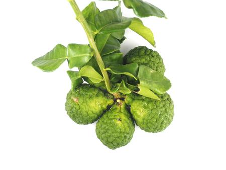 bergamot herb Stock Photo
