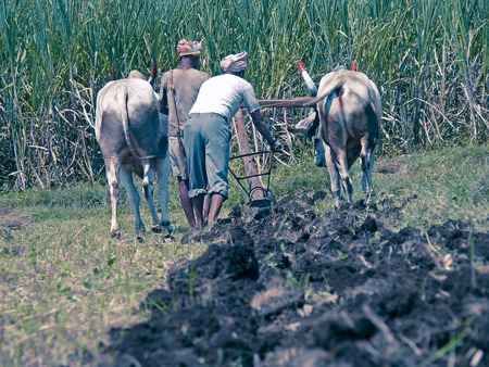 Farmers are ploughing a field for cultivation of a crop by a traditional way, Mulshi, Pune, Maharashtra, India photo