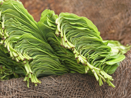 betel leaf at Market place, india photo