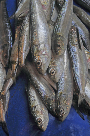 Engraulis encrasicolus Fishes for Sale at Market, Goa, India photo