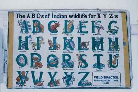 alphabet with animals photo