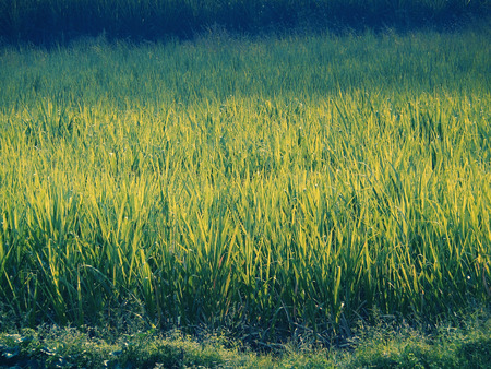 journeying: an agricultural land and village, India