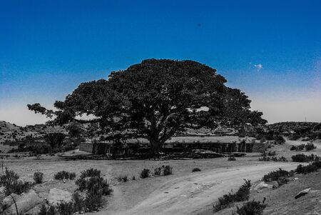 Eritrea, Africa - 10/8/2019: Traveling around the vilages near Asmara and Massawa. An amazing caption of the trees, mountains and some old typical houses with very hot climate in Eritrea. 写真素材