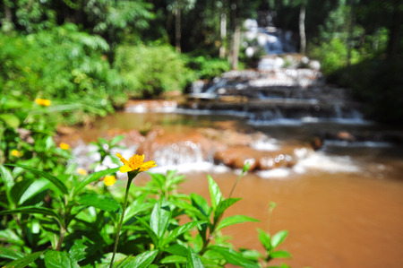 water fall: the yellow flower in front of water fall